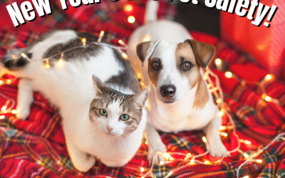 New Year's Eve Pet Safety