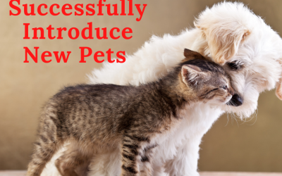 31 Tips for Successfully Introducing New Pets to Existing Pets