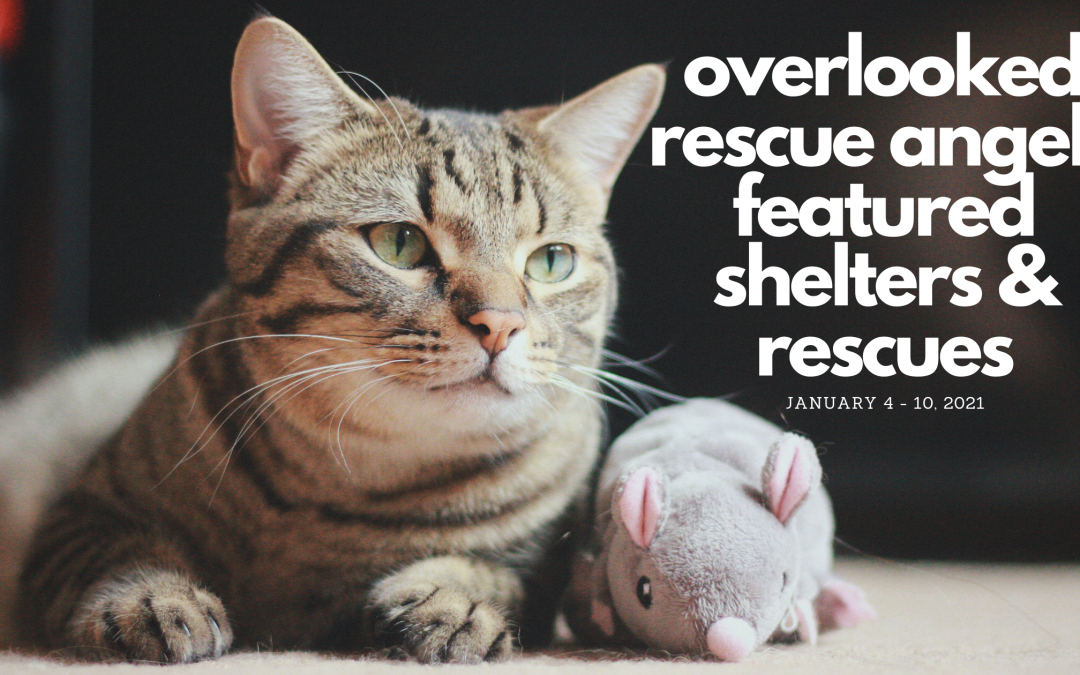 Featured Rescues January 4-10, 2021