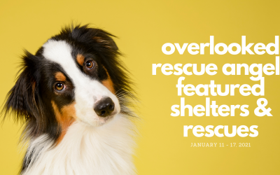 Featured Rescues January 11-17, 2021