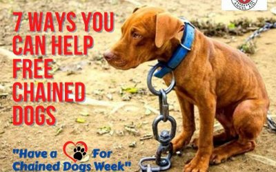 7 Ways You Can Help FREE Chained Dogs